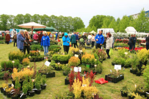 Hedelmäpuut, pensaat ja kesäkukat kuuluvat Pärnun taimimarkkinoiden runsaaseen valikoimaan.