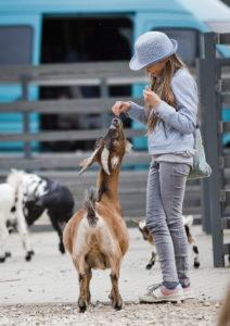 Tallinnan eläintarhassa pääsee myös ruokkimaan eläimiä lasten eläintarhan puolella.