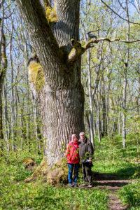 """""""Puhtu oli ihan oma maailmansa, todella hieno paikka"""", hehkuttaa Bore Wanner. Kuvassa hän on vaimonsa Anjan kanssa Puhtun tammen alla."""