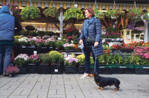 Aija Roihu tykkää käydä ostamassa tuoreet marjat ja vihannekset Nõmmen torilta. Mäyräkoira Tedy on aina mukana ostoksilla.