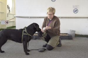 Kaisa Korpelan kolmevuotias labradorinnoutaja Lilli on tottunut matkaaja. Lilli on päässyt mukaan reissuille pennusta pitäen. Silja Europa -aluksella koirat voivat jaloitella 6. kannella. Korpela ei koskaan jätä Lilliä autokannelle.
