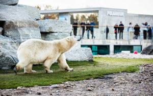 Tallinnan eläintarha on varma lomaretkikohde kaiken ikäisille Tallinnan-kävijöille.