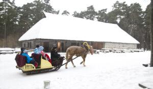 Viron ulkomuseossa on nähtävänä jykeviä riihitaloja, ja jos lunta on, rekiajelukin voi onnistua.